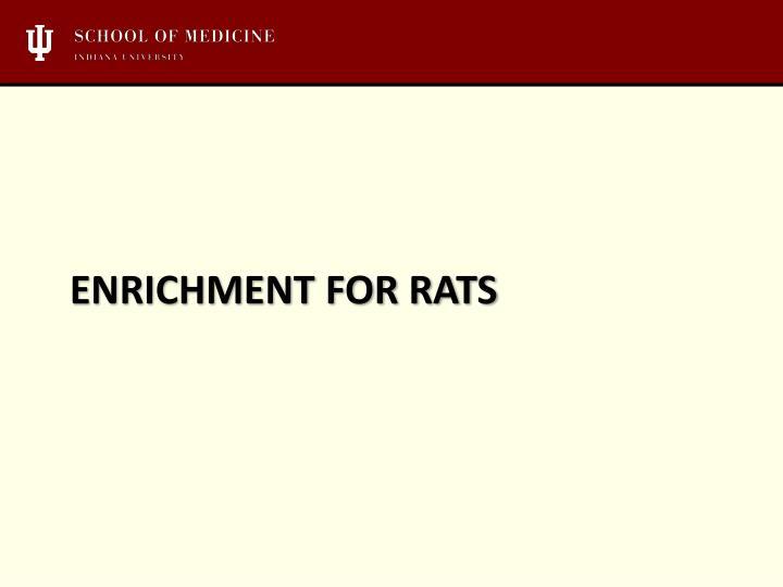 Enrichment for rats