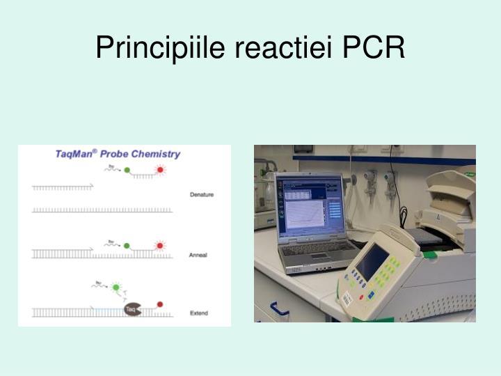Principiile reactiei PCR