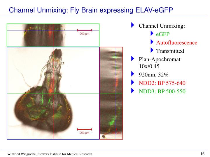 Channel Unmixing: Fly Brain expressing ELAV-eGFP