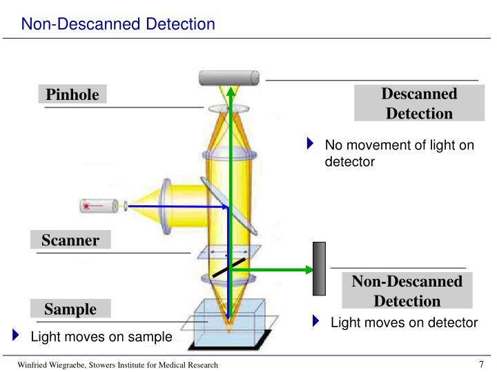 Non-Descanned Detection