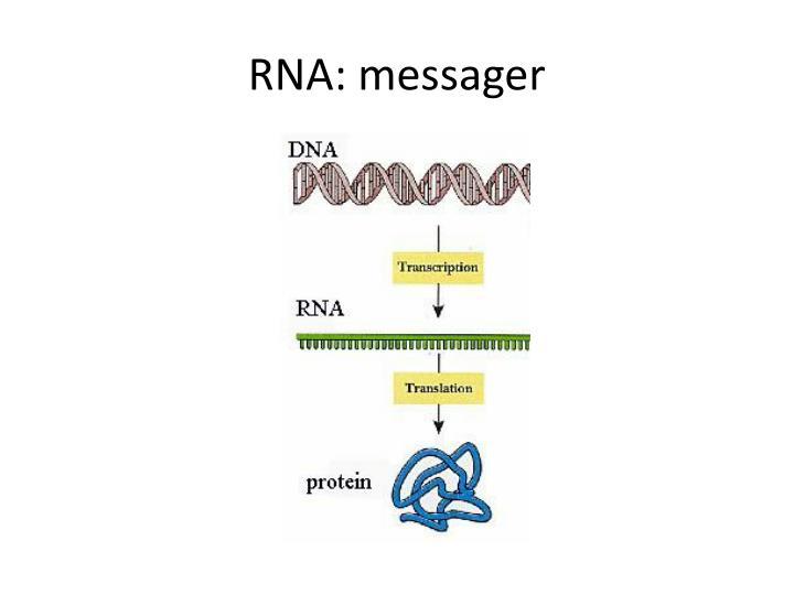 RNA: messager