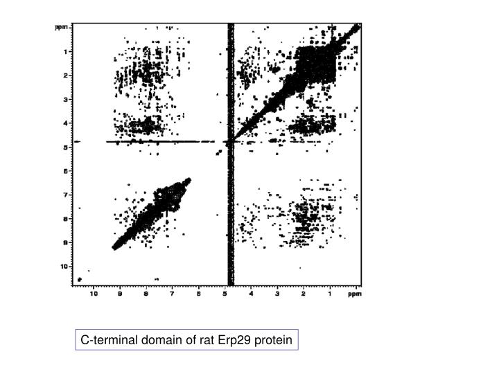 C-terminal domain of rat Erp29 protein