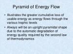 pyramid of energy flow