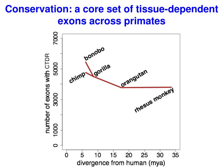 Conservation: a core set of tissue-dependent exons across primates