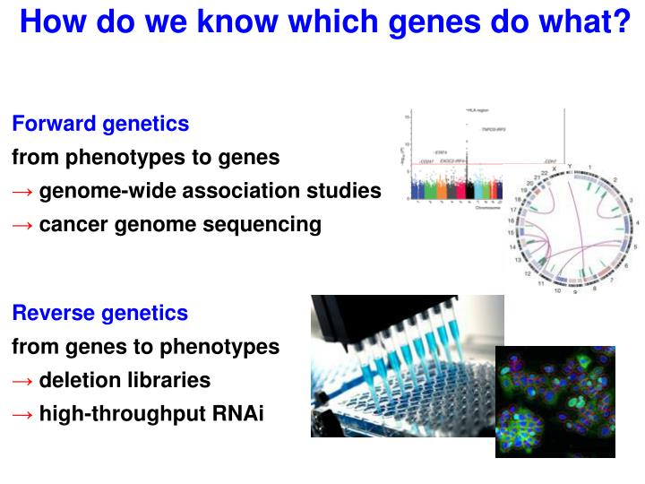 How do we know which genes do what?