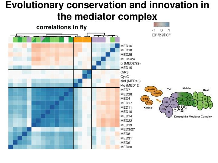 Evolutionary conservation and innovation in the mediator complex