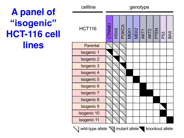 "A panel of ""isogenic"" HCT-116 cell lines"