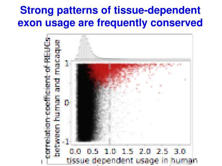 Strong patterns of tissue-dependent exon usage are frequently conserved