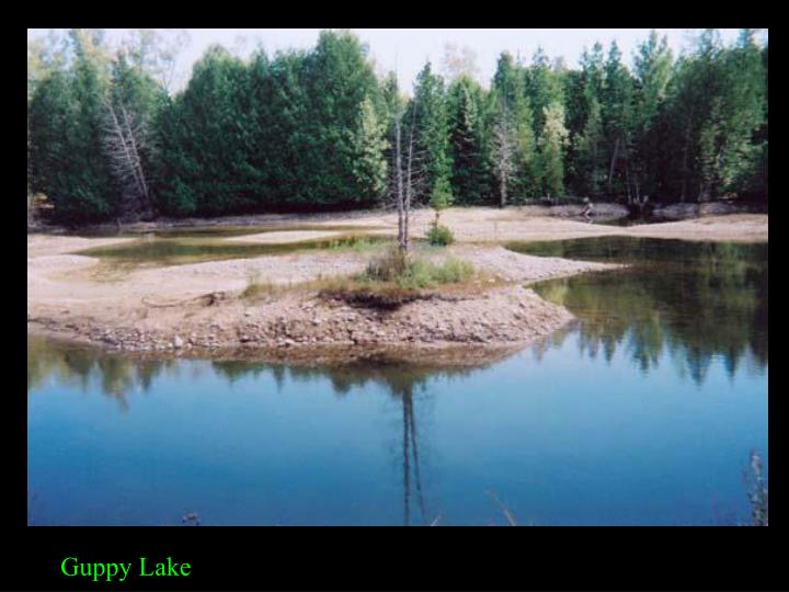 Guppy Lake
