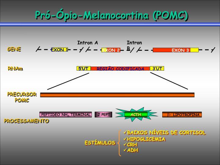 Pró-Ópio-Melanocortina (POMC)