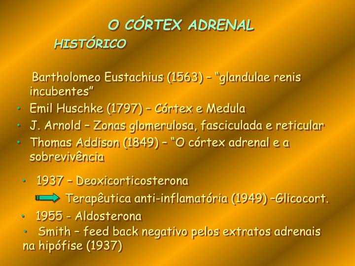 O CÓRTEX ADRENAL