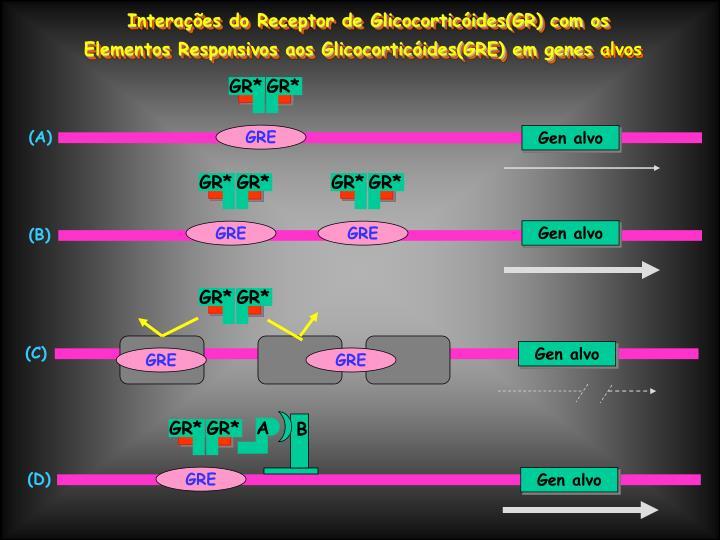 Interações do Receptor de Glicocorticóides(GR) com os