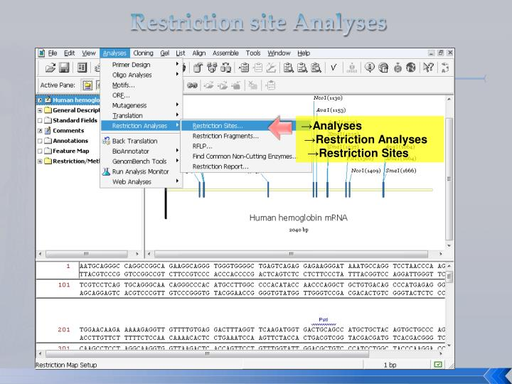 Restriction site Analyses