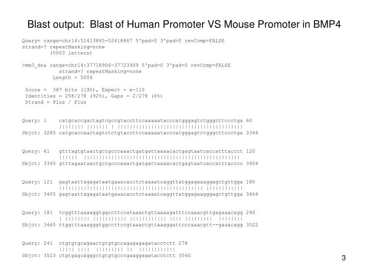Blast output blast of human promoter vs mouse promoter in bmp4
