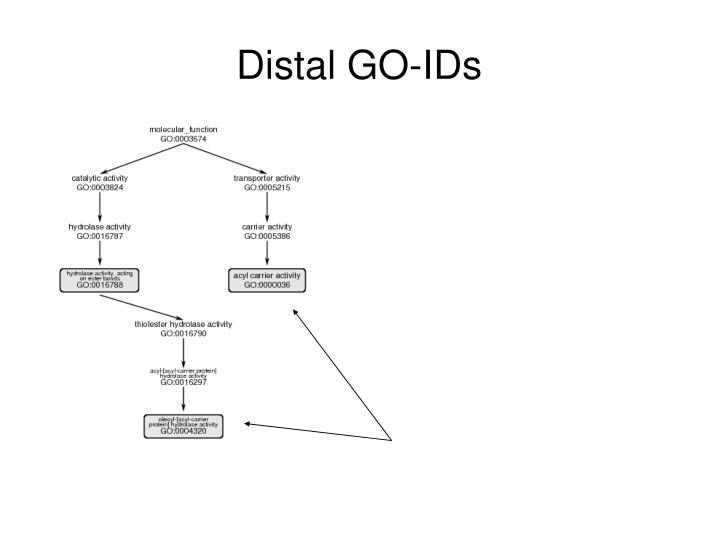 Distal GO-IDs