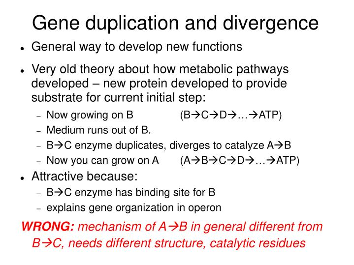 Gene duplication and divergence