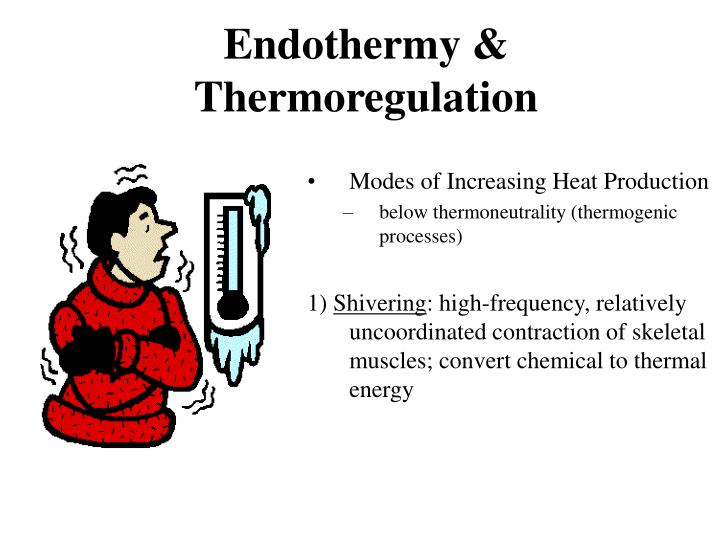 endothermy thermoregulation n.