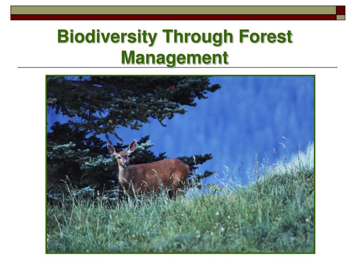 Biodiversity Through Forest Management