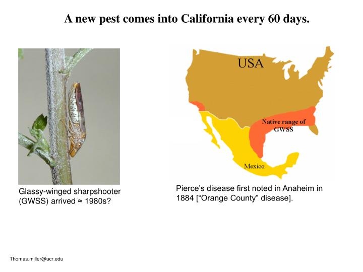 A new pest comes into California every 60 days.