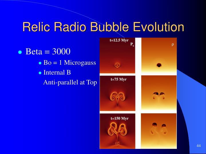 Relic Radio Bubble Evolution