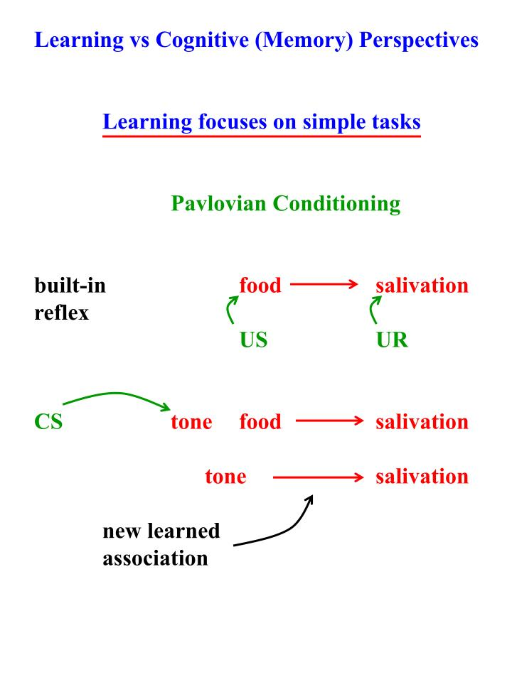 Learning vs Cognitive (Memory) Perspectives