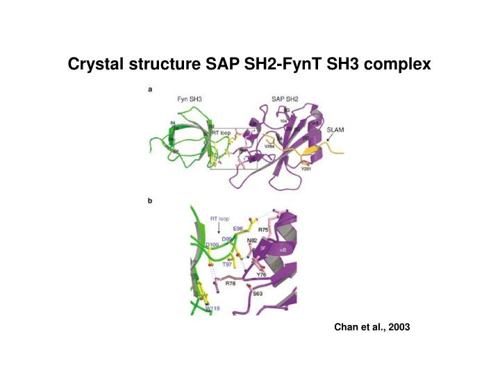 Crystal structure SAP SH2-FynT SH3 complex
