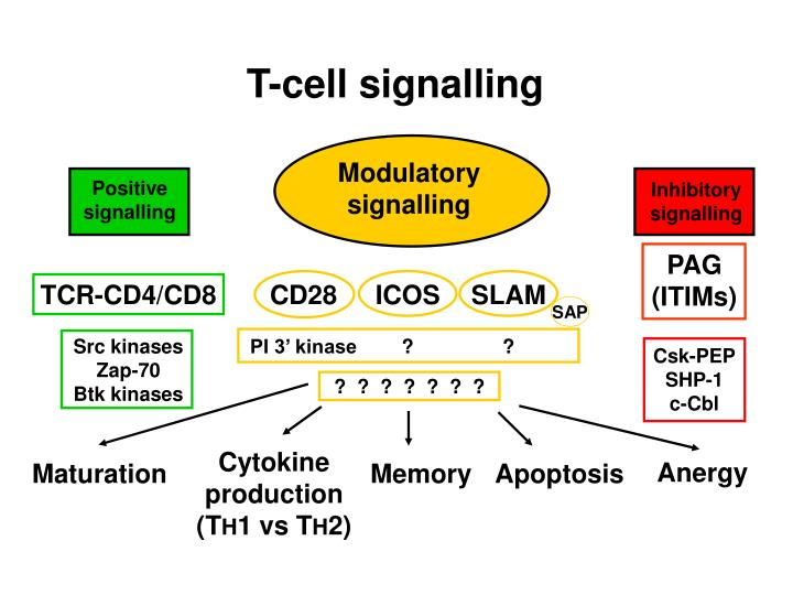 T-cell signalling