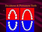 deciduous permanent teeth
