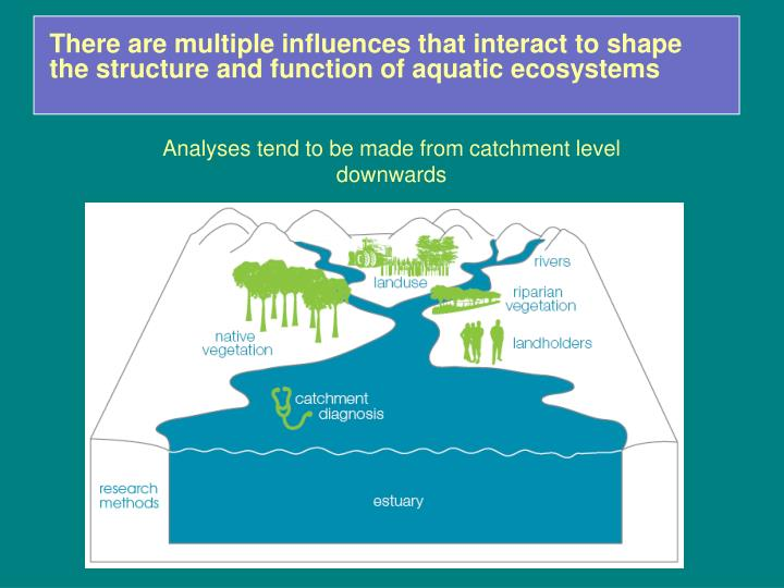 There are multiple influences that interact to shape the structure and function of aquatic ecosystems