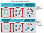 positive and negative selection1