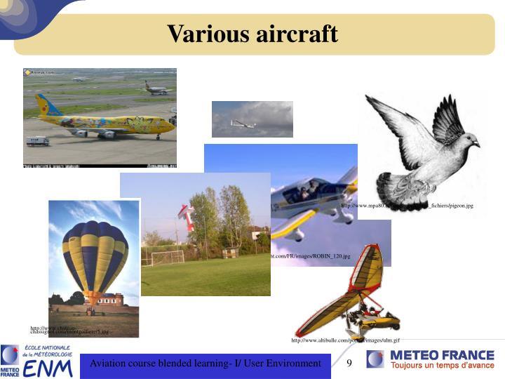 http://www.mpa80.be/mpa/mpaXpress_fichiers/pigeon.jpg