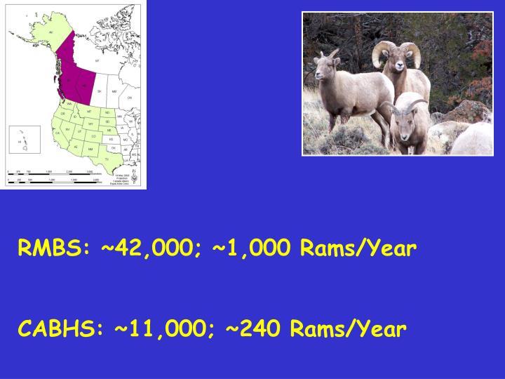 RMBS: ~42,000; ~1,000 Rams/Year