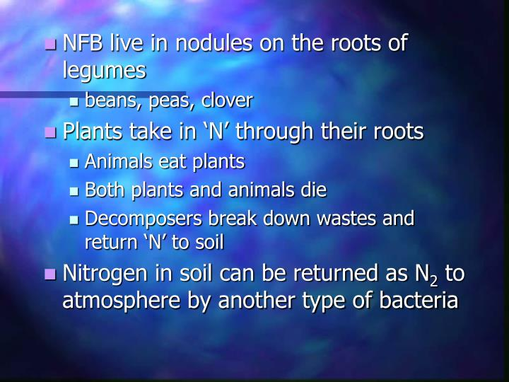 NFB live in nodules on the roots of legumes