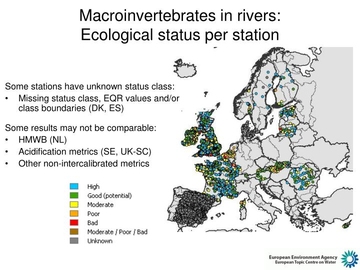 Macroinvertebrates in rivers: