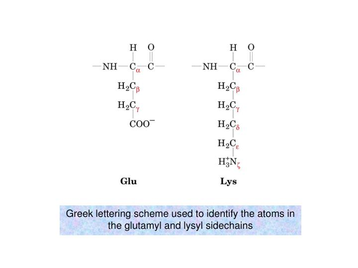 Greek lettering scheme used to identify the atoms in the glutamyl and lysyl sidechains