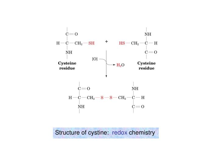 Structure of cystine: