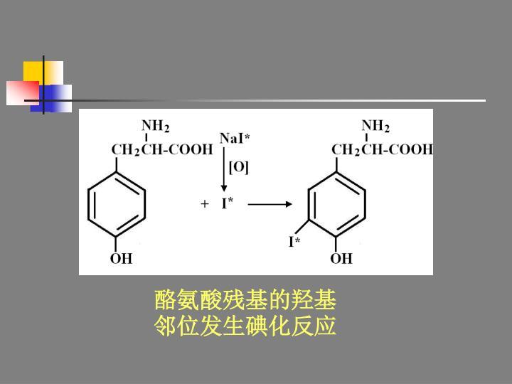 酪氨酸残基的羟基邻位发生碘化反应