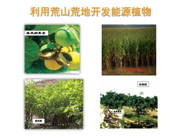 利用荒山荒地开发能源植物