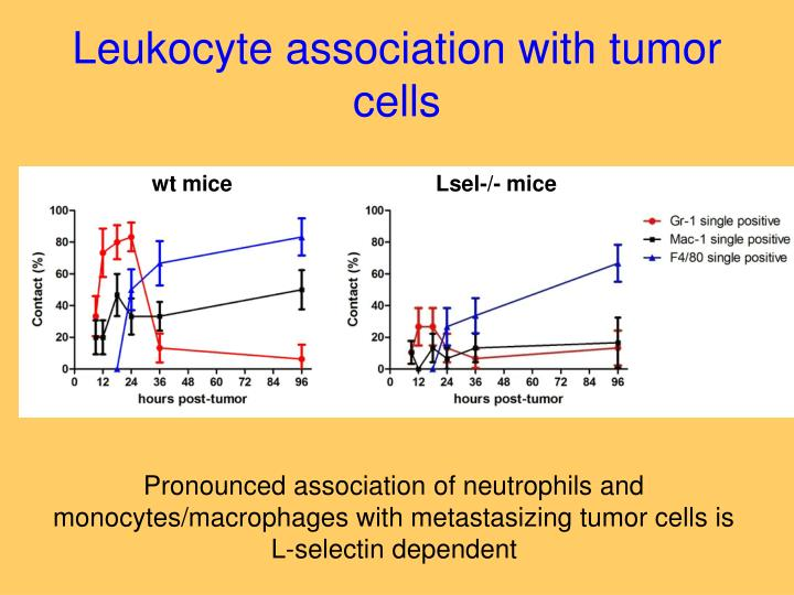 Leukocyte association with tumor cells