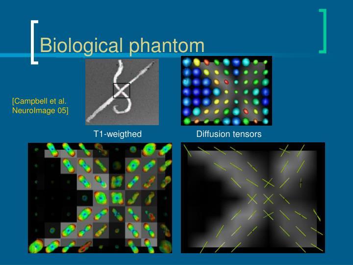 Biological phantom