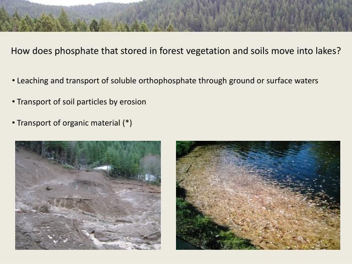 How does phosphate that stored in forest vegetation and soils move into lakes?