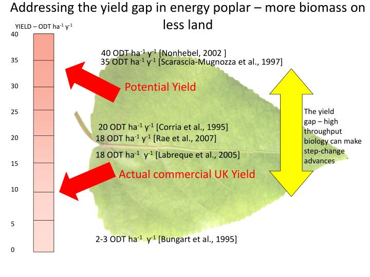 Addressing the yield gap in energy poplar – more biomass on less land