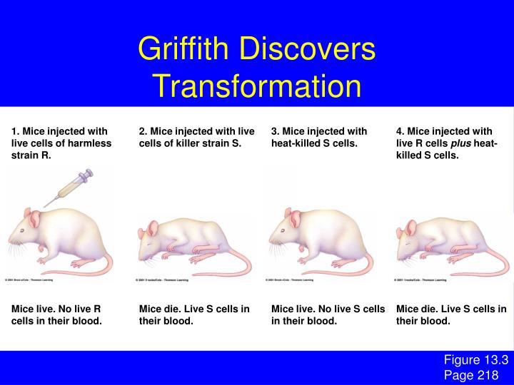 Griffith Discovers Transformation