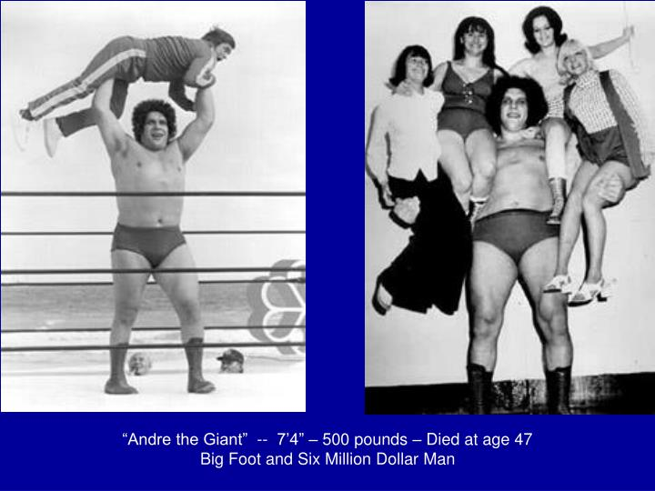 """""""Andre the Giant""""  --  7'4"""" – 500 pounds – Died at age 47"""