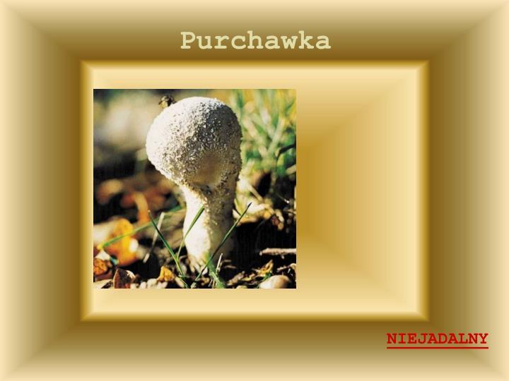 Purchawka