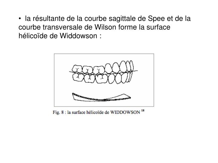 la résultante de la courbe sagittale de Spee et de la courbe transversale de Wilson forme la surface hélico