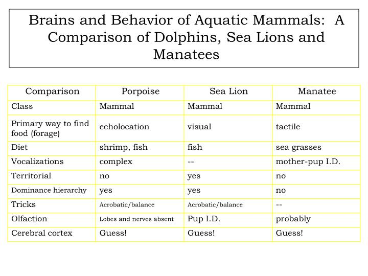 Brains and Behavior of Aquatic Mammals:  A Comparison of Dolphins, Sea Lions and Manatees