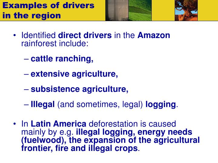 Examples of drivers in the region