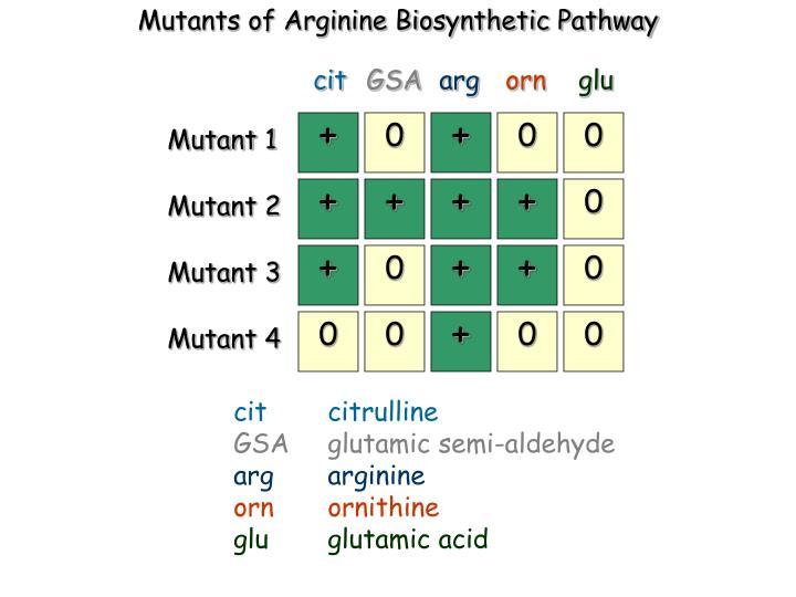 Mutants of Arginine Biosynthetic Pathway