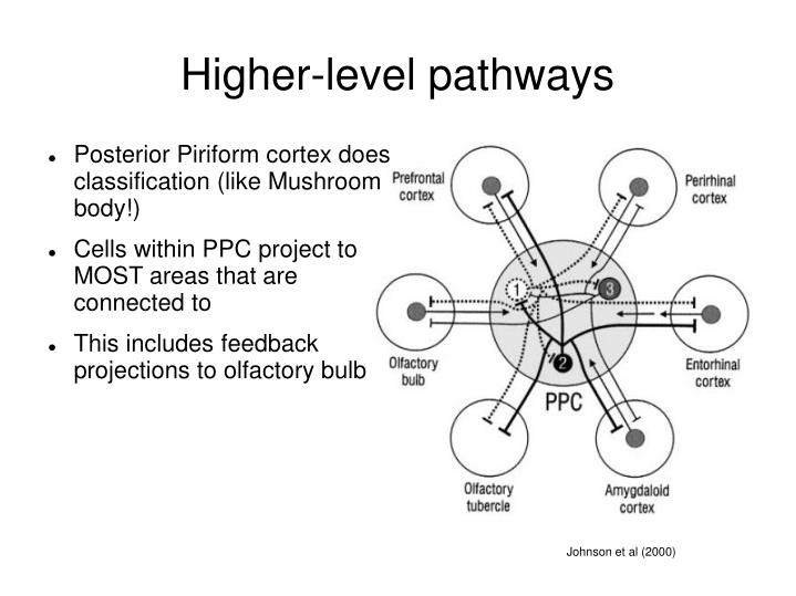 Higher-level pathways